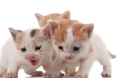 three kittens Stock Photo - 5073704