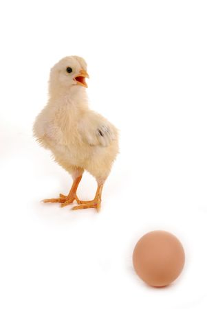 A baby chick over a white background Stock Photo - 5064612