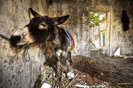 big ass: handsome donkey in a grungy room in funny angle