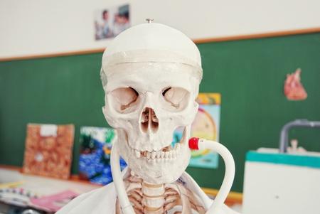 college professor: human anatomy model in a biology class  Stock Photo