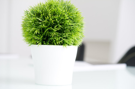 Green plant in a modern white pot Stock Photo