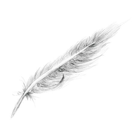 plume: Croquis � main Feather �tabli Isol� sur fond blanc