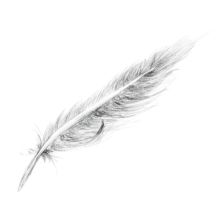falling down: Feather Hand drawn Sketch Isolated on white