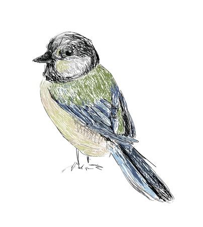 parus: Bird Hand drawn  Illustration