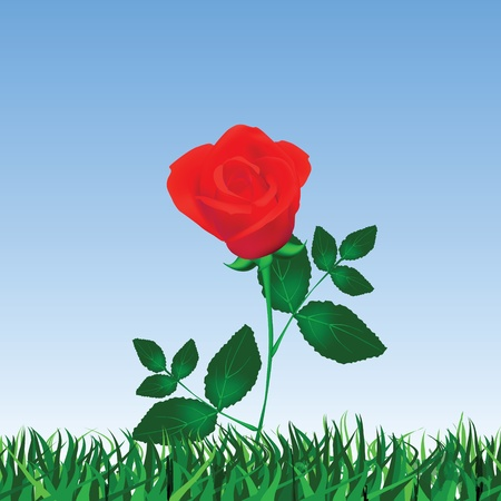 Rose isolated on white  Vector