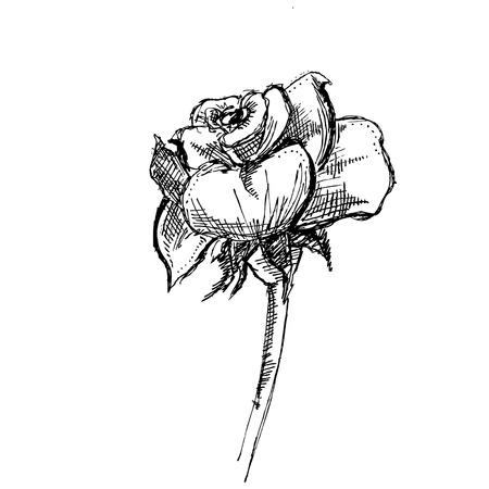 thorn bush: Rose Retro Clip art