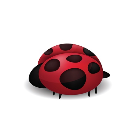 Ladybug isolated on white  Stock Vector - 16166531
