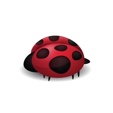 Ladybug isolated on white Stock Vector - 16166531