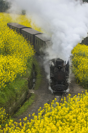 Steam train run through rapeseed flower field in Chengdu, China photo
