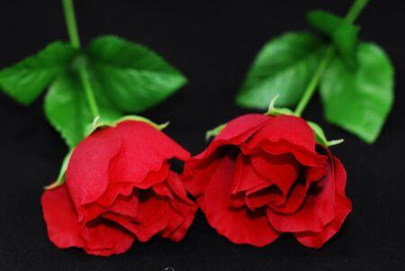 이 검정색 배경에 빨간색 실크 발렌타인 장미 한 켤레입니다
