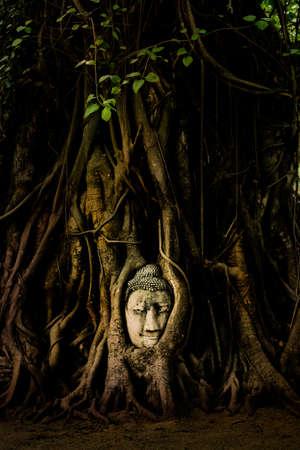 cabeza de buda: Estatua de Buda cabeza en las ra�ces del �rbol