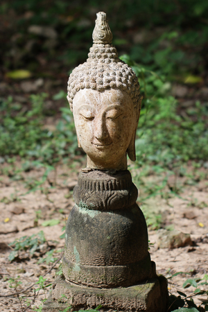400 years old of ancient head stone buddha statue in the forest at historical museum Thailand, art crafting sculpture, head, face, lobe, ear, hair, nose