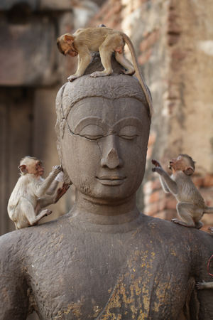 Children Monkey standing playing on ancient Buddha head statue, Candid animal wildlife picture waiting for food, group of mammal on historical travel destination in Asia Stock Photo