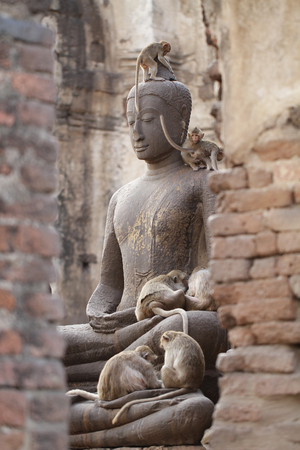 Monkey family sitting playing on ancient damaged Buddha statue, Candid animal wildlife, group of mammal on historical travel destination in Asia, home decoration wallpaper Stock Photo