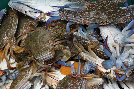 group of captured living Freshwater crab, banded shell animal in ocean fresh market seafood restaurant, pregnant seafood, delicious gourmet Imagens