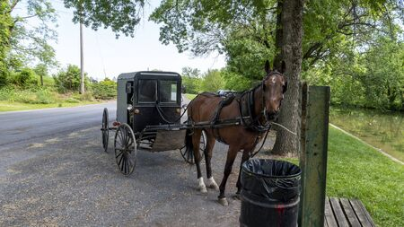 Horse and Buggy Waiting for its Owner tied up Parked