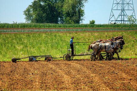 Chłopiec z Amiszów orki pole z 5 końmi ciągnącymi pług, aby przewrócić pola, aby przygotować się do sadzenia