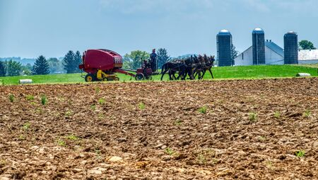 Amish Farmer using 6 Horses to Pull his Gas Engine Powered Farm Equipment on a Sunny Day 免版税图像