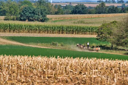 Amish family working together to harvest the corn on a sunny autumn day 스톡 콘텐츠 - 147957353