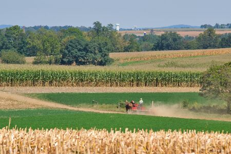 Amish family working together to harvest the corn on a sunny autumn day