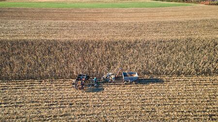 Aerial of an Amish farmer harvesting his corn with six horses pulling the harvester