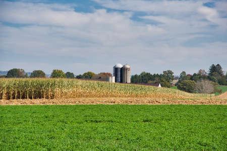 A grassy field near a cornfield under a blue cloudy sky 스톡 콘텐츠 - 150809212