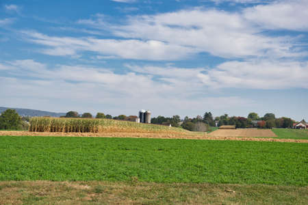 A grassy field near a cornfield under a blue cloudy sky 스톡 콘텐츠 - 150810471