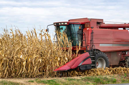 A red harvesting machine on a corn farm 스톡 콘텐츠