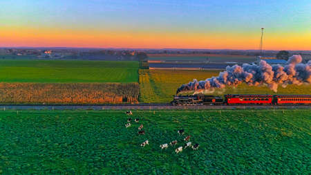 Strasburg, Pennsylvania, October 2020 - Aerial View of Steam Passenger Train at Sunrise Traveling Thru Amish Countryside with Cows Running away