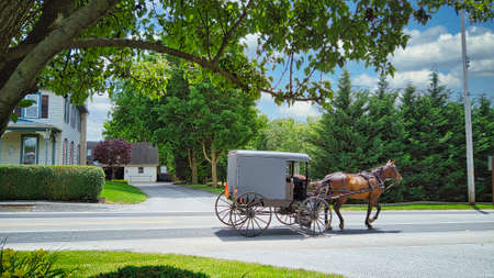 An Amish Horse and Buggy Traveling along a Countryside Road on a Beautiful Summer Day