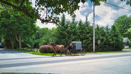 View of an Amish Horse and Buggy Trotting Down a Country Road