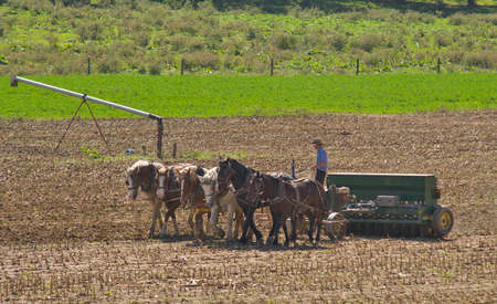 View of an Amish Worker Working the Field with 6 Horses Pulling his Farm Equipment 스톡 콘텐츠