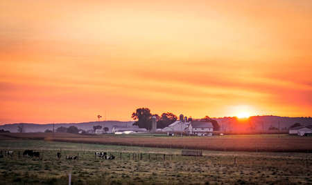 Sunrise of a Farm and Homestead with Cows Grazing and a Red Sun Archivio Fotografico