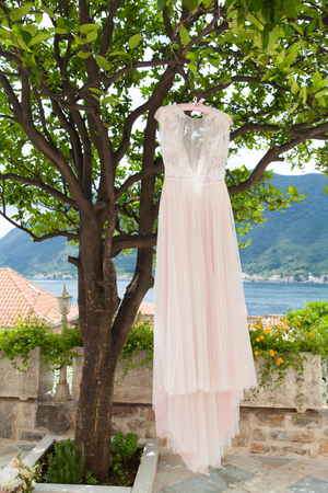 pink wedding dress on hangers on a tree outdoors Stok Fotoğraf