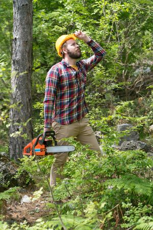 a bearded chainsaw worker in the forest Archivio Fotografico