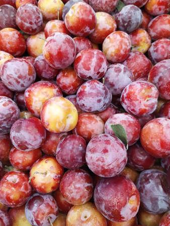 Macro Photo prunes de fruits alimentaires. Fond de texture de prunes bleues fraîches. Image produit fruit prunes bleues. Profondeur de champ limitée. Fermer. Banque d'images