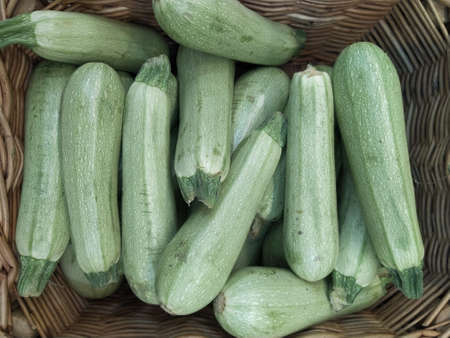 Fresh cropped green Zucchini Offer in the vegetable market Summer squash. Close-up