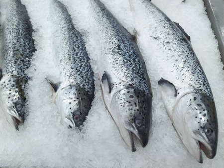 Salmon on cooled market display, closeup shot of heads. Fresh red fish on ice Stock Photo