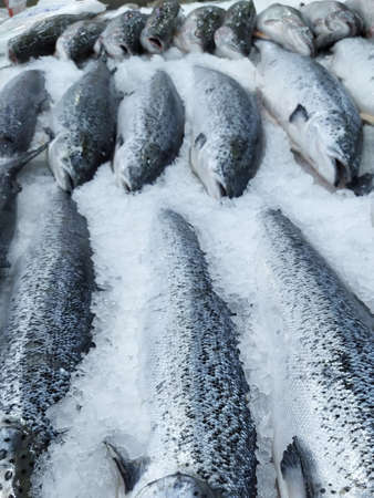 Salmon on cooled market display, closeup shot of heads. Fresh red fish on ice Stock fotó