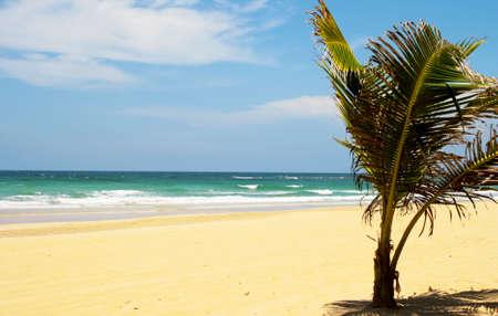 De weergave van een carribean strand. Stockfoto - 5562981