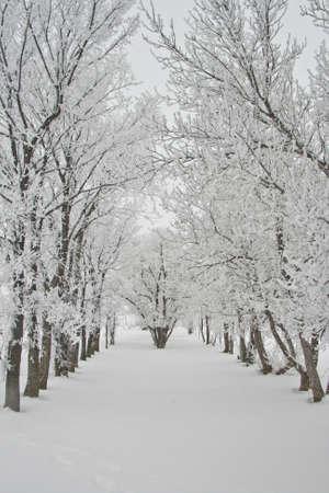 Snow Covered Lane Stockfoto