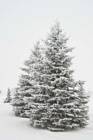 Sneeuw bedekte hout Stockfoto - 71955604