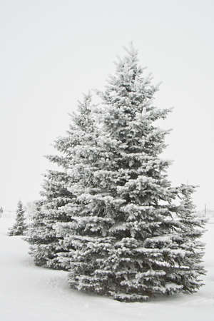 Snow Covered Wood Stock Photo