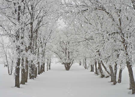 Snow Covered Wood Stockfoto