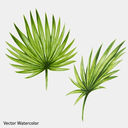 palmeras: Acuarela hojas de palmera tropical. Ilustración del vector.