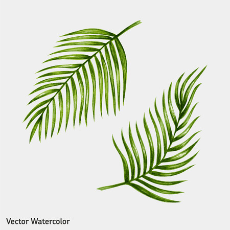 leaf: Watercolor tropical palm leaves. Vector illustration.