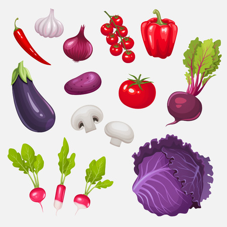 radish: Set of fresh vegetables. Vector illustration.