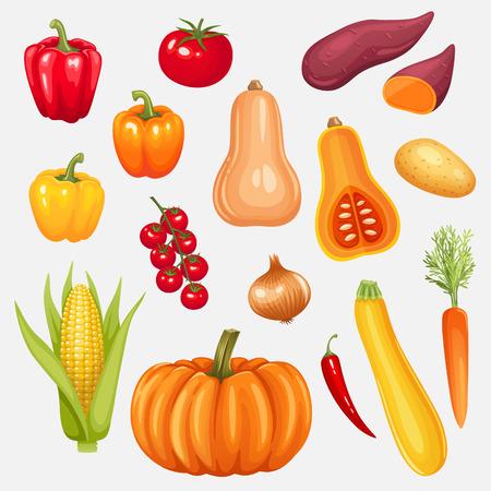 sweet potato: Set of fresh vegetables. Vector illustration.