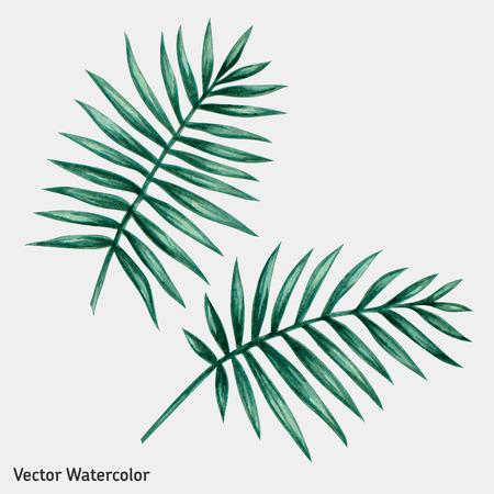 Acuarela hojas de palmera tropical. Ilustración del vector.