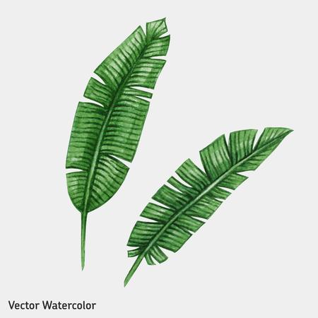 Aquarelle palme tropicale laisse. Vector illustration.
